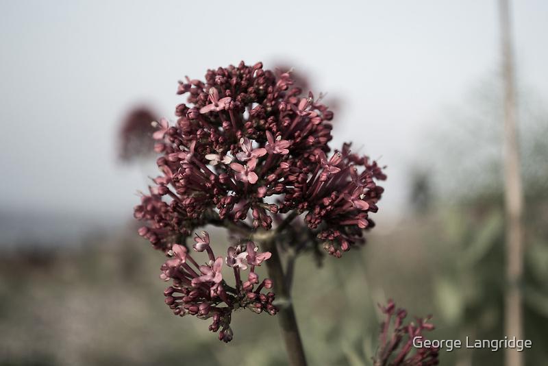 The Dull Flower by George Langridge