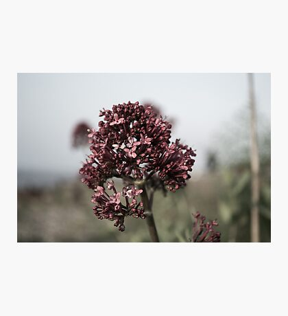 The Dull Flower Photographic Print