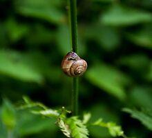 Lone Snail by George Langridge