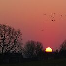 Sunrise in the Park by KUJO-Photo