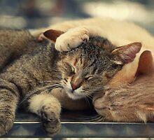 Real frienship :) by Ellen van Deelen