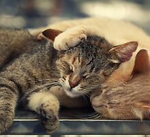 Real frienship :) by Ellen van Deelen