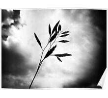 Grass & sky Poster