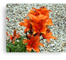 BRIGHT COLOURED LILLY . Canvas Print