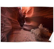 Coils of Rattlesnake Canyon Poster