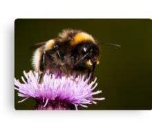 Thistle Bee Fine Canvas Print