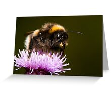 Thistle Bee Fine Greeting Card