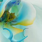 Blue Orchid ~ Beauty by DesignsbyiRis