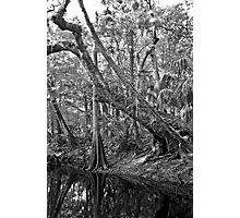 River Bank. Econlockhatchee River. Photographic Print