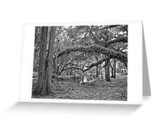 Oak and Resurrection Ferns. Three Lakes W.M.A. Greeting Card