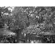 Slough. Three Lakes W.M.A. Photographic Print