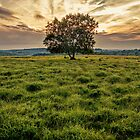 a lonely tree by samcmoore