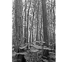 Oak and Caladium. Shingle Creek. Photographic Print
