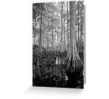 Cypress Swamp. Econlockhatchee River. Greeting Card