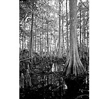 Cypress Swamp. Econlockhatchee River. Photographic Print