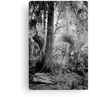 Oak and Palm. Green Swamp W.M.A. Canvas Print