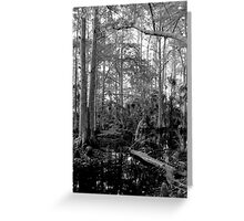 Cypress Swamp #2. Green Swamp W.M.A. Greeting Card