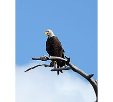 Bald Eagle. Shingle Creek  Photographic Print