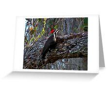 Pileated Woodpecker. Shingle Creek. Greeting Card