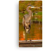 Great Blue Heron. Blue Cypress Lake. Canvas Print