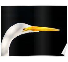 Great Egret Portrait. Merrit Island N.W.R. Poster