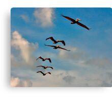 Pelicans in Flight. Melbourne Shores Florida. Canvas Print