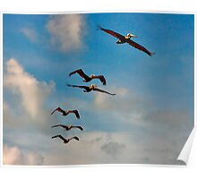 Pelicans in Flight. Melbourne Shores Florida. Poster