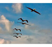 Pelicans in Flight. Melbourne Shores Florida. Photographic Print