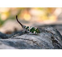 Simply Insecta Photographic Print