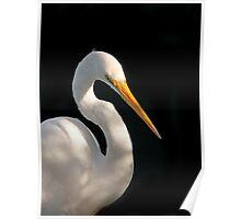 Great Egret Portrait #2. Merritt  Island N.W.R. Poster