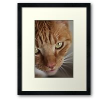 Say Cheese! Framed Print
