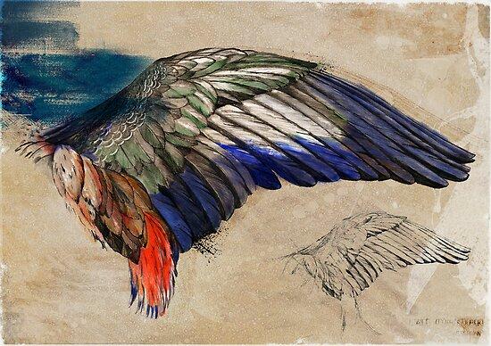 L'Aile de Durer ( Durer's wing) by Stephan Parylak