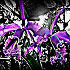 Orchids by lial