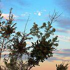 Moonrise Bush by George Lenz