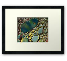 Bubble's Framed Print