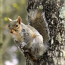 Squirrel On A Short Stick by Sharon Woerner