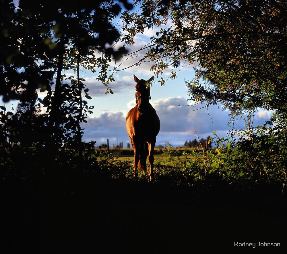 Equine, Evergreen Montana by Rodney Johnson
