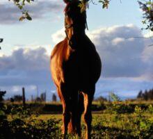 Equine, Evergreen Montana Sticker