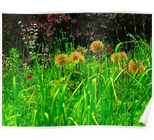 Wonders at the grass roots level Poster
