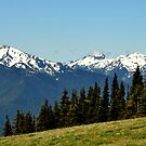 """""""Olympic National Park High Country"""" by Lynn Bawden"""