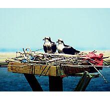 Osprey Nest Decor Photographic Print