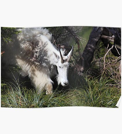 Mountain goat mother II Poster
