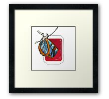 Butterfly in hot sauce  Framed Print