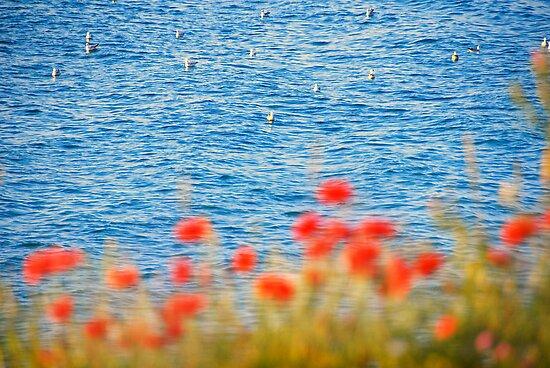 Seagulls' Heaven by BelleFlores
