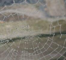 Spiderweb 2 Sticker