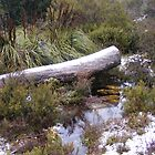 Cradle mountain, snow.  by Esther's Art and Photography