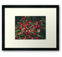 Tiny Winter Berries Framed Print