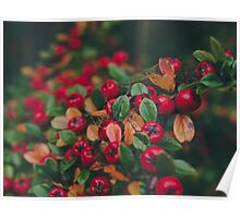 Tiny Winter Berries Poster