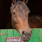 Gorgeous George  !! by Irene  Burdell