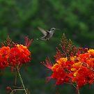 Three Flowers by GuyAmazed